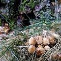 #las #grzyb #przyroda #natura #sorux #makro