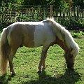 #przyroda #natura #sorux #koń #kucyk