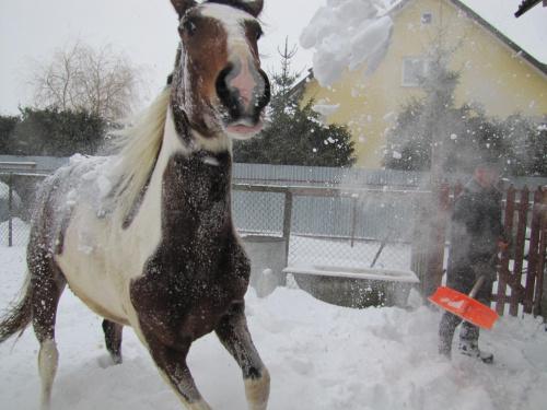 Śniegu to ona się nie boi ;)