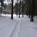 #ścieżka #leśna #las #zima