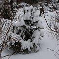 Dwudniowa zima...i komu to przeszkadzało??? Widok z mojego okna. #zima #śnieg #biało