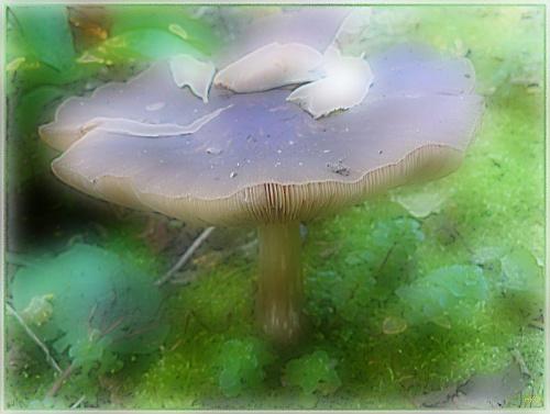 Jeden z wielu ale ten gigant jest z mojego ogrodu! #namalowane #obrazy #grzyb #WOgrodzie
