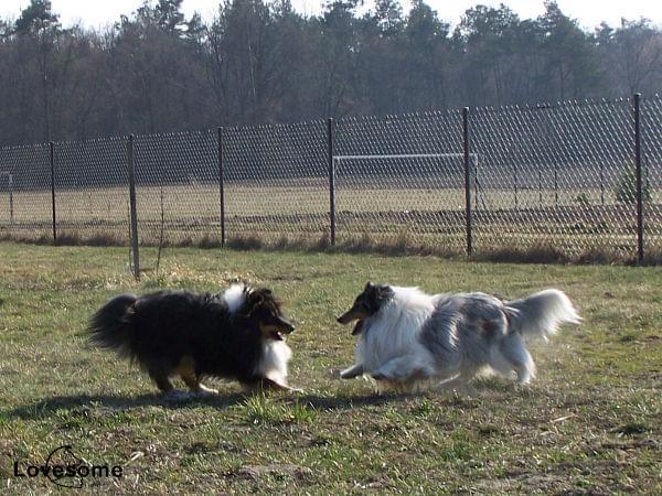Merlin i Duke