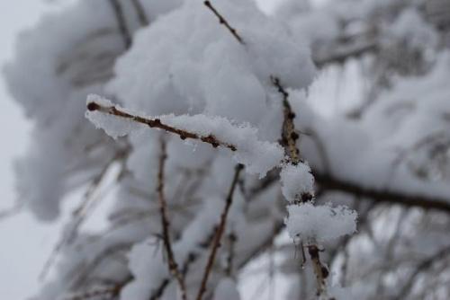 snieg na drzewach