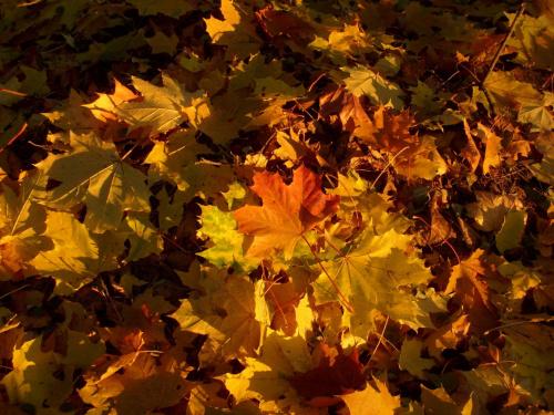 Jesień w białostockim Parku Dojlidy #jesień #liście #park #Białystok #ParkDojlidy
