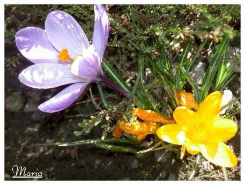 Wiosna nadeszła........... #wiosna