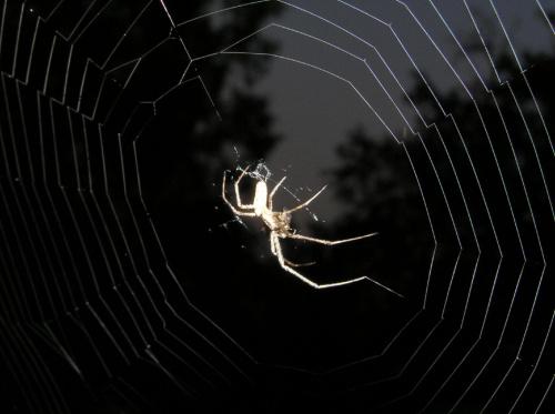 #noc #pająk #pajęczyna