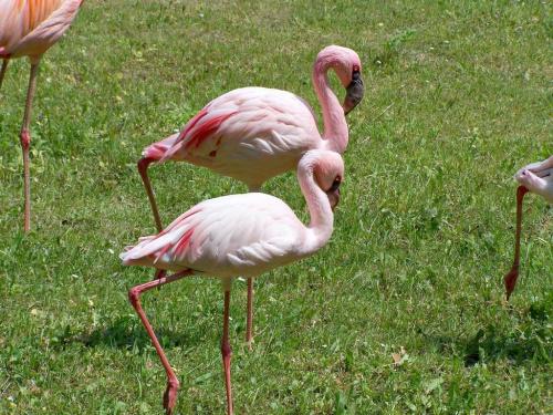 flamingi #ficiol007 #flamingi #ptaki