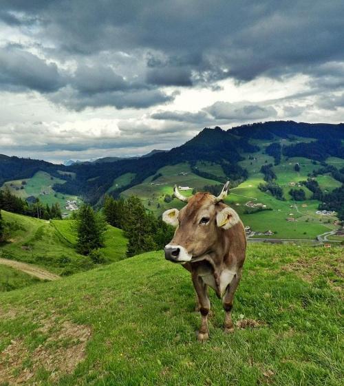 Milka #zwierzeta #krajobrazy #natura