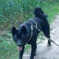 #akita #KarelskiPiesNaNiedźwiedzie #pies #piesek